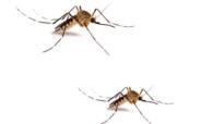 как и чем обработать участок от комаров; как избавиться от комаров на дачном участке; средство от комаров для обработки участка; какое средство выбрать от комаров
