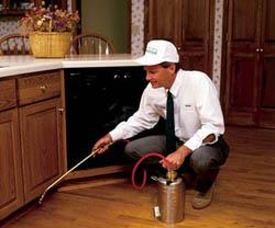 уничтожить тараканов в квартире, вывести тараканов, избавиться от тараканов, уничтожение тараканов, профессиональное выведение тараканов в квартире