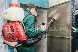 Уничтожение грызунов и насекомых в подвальных помещениях