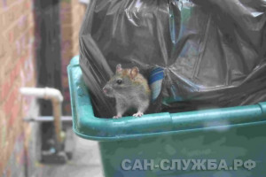 Обработка мусорных контейнеров от мышей и крыс