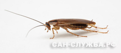 вывести тараканов, выведение тараканов, борьба с тараканами, уничтожение тараканов