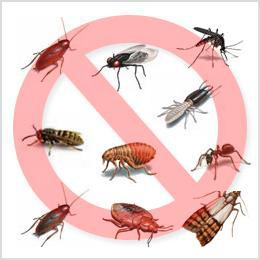 дезинсекция, уничтожение клопов, уничтожение тараканов, уничтожение муравьев, выведение постельных клопов и тараканов, борьба с насекомыми