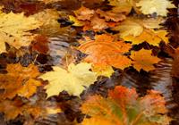 когда опасны клещи осенью, когда опасны клещи; когда активны клещи, Сезон активности клещей, сезон энцефалитных кещей, сезон иксодовых клещей