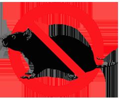 дератизация квартиры от крыс и мышей; заказать дератизацию квартиры от грызунов; обработка квартиры от всех видов грызунов
